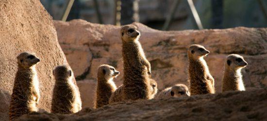 Bioparc Valencia animali