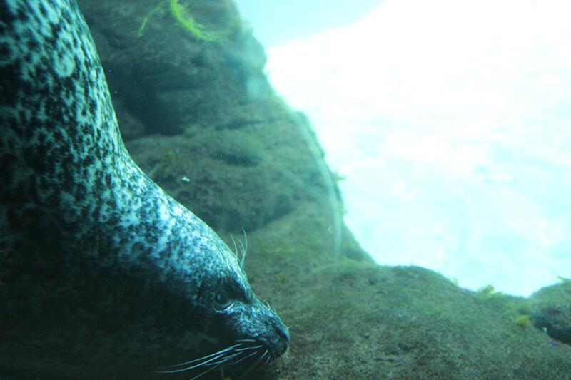 Oceanografico Valencia animali